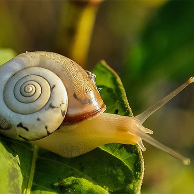 Citrix-slow-as-Snail