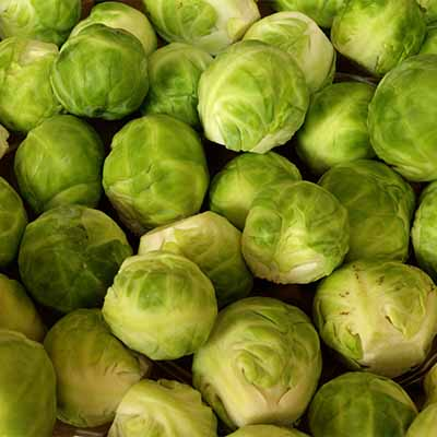 Learn how to grow Brussels sprouts | SocialGazelle.com