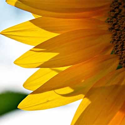 What does full sun really mean to plants?   SocialGazelle.com